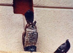 Pigeon sitting on plastic owl