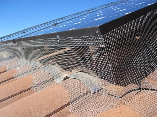Solar panel pigeon proofing should be clean